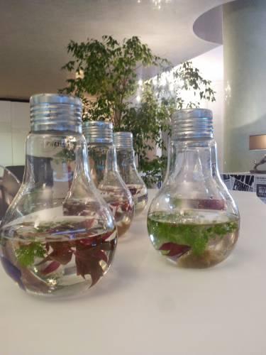 serax, vaso in vetro, vaso per pesci, boccia per pesci, boccia vetro
