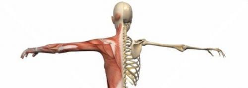 muscoli cervicali.jpg